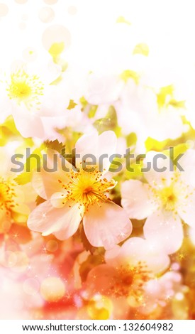 Spring background with flowers, bright blur colors/ Summer flowers  background with pink blossom - stock photo