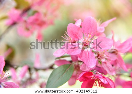 spring background with pink flowers in sunshine