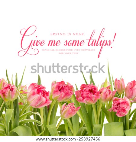 spring background with pink tulips - stock photo