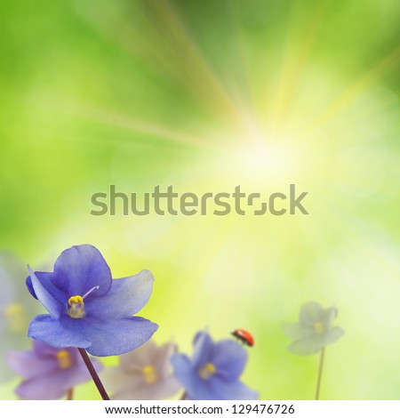 spring background with violet flowers and ladybird - stock photo