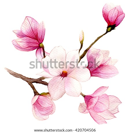 Spring background with watercolor magnolia flower - stock photo