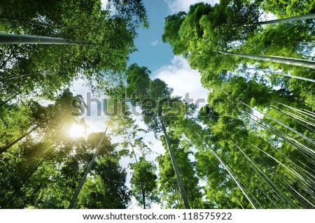 Spring bamboo forest with sprouts in morning sunshine glow - stock photo