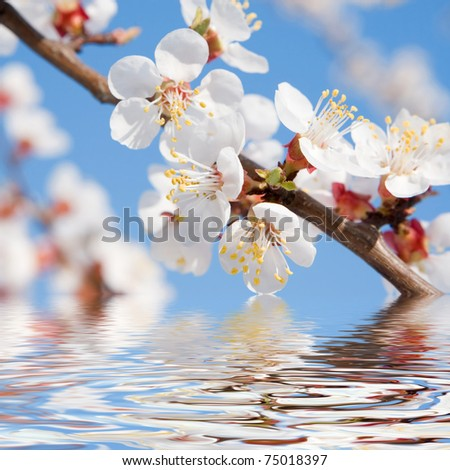spring beauty - stock photo