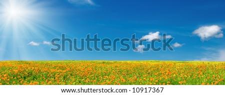 Spring bloom - stock photo