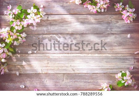 Spring blooming branches on wooden background. Apple blossoms