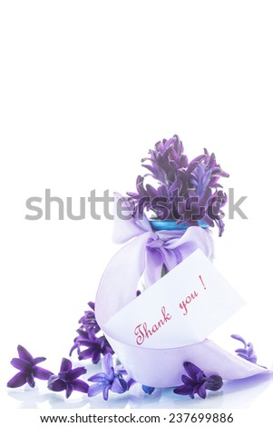 Spring blooming hyacinth  on a white background - stock photo