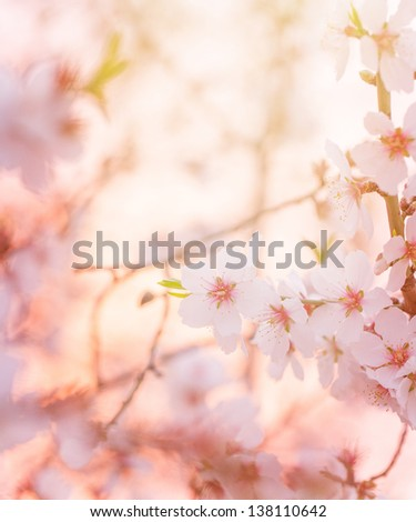 Spring blooming tree,  dreamy sunny background, beautiful fine art photo style, little white flowers on tree branch over sunset, garden on spring season, soft focus - stock photo