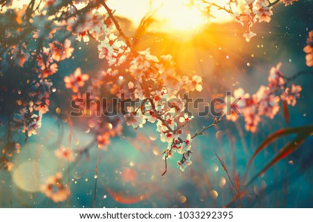 Spring blossom background beautiful nature scene spring blossom background beautiful nature scene 1033292395 shutterstock voltagebd Image collections
