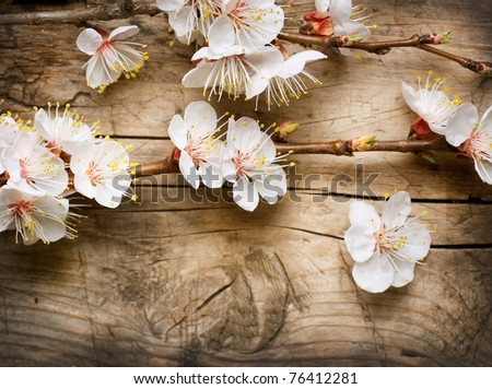 Spring Blossom over wood background - stock photo