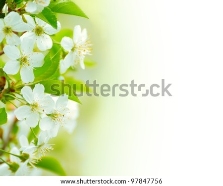 Spring blossoming flower on the white background. Space for text - stock photo