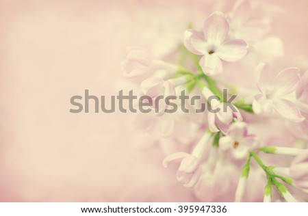 Spring blossoming lilac, selective focus - stock photo