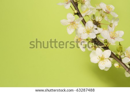 Spring blossoms. - stock photo