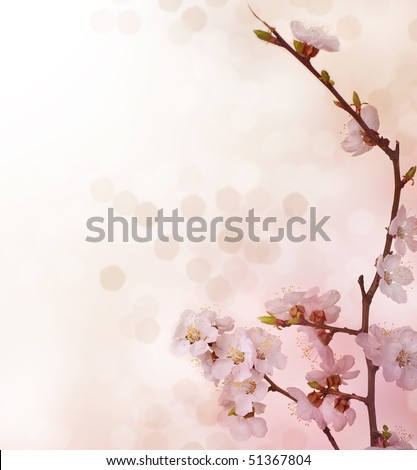 Spring Blossoms border - stock photo