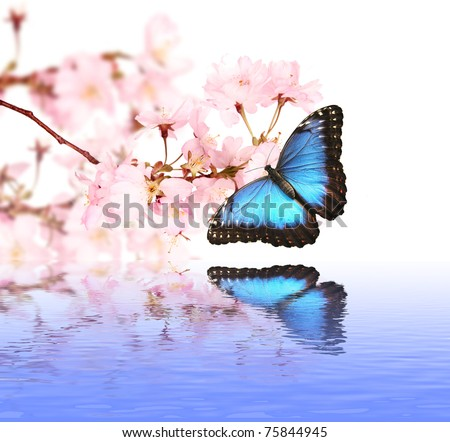Spring blossoms with butterfly - stock photo