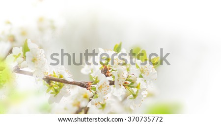 Spring border background with white blossom, close-up.