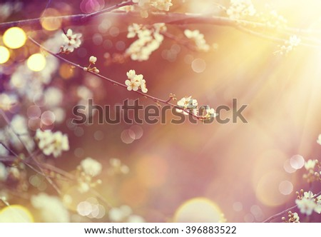 Spring border or background art with blossom. Beautiful nature scene with blooming tree and sun flare. Sunny day. Spring flowers. Beautiful Orchard. Abstract blurred background. Springtime - stock photo
