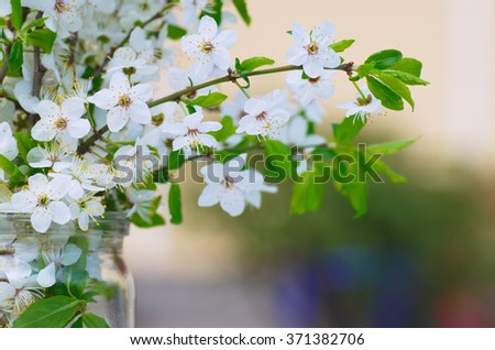 Spring bouquet of branches of cherry blossoms