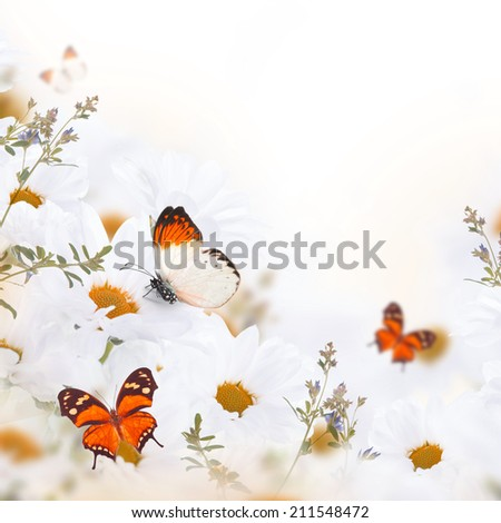 Spring bouquet of daisies and butterfly, floral background - stock photo