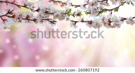 Spring branch with sunny flowers, nature background - stock photo
