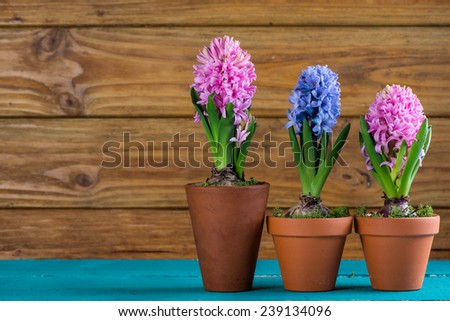 Spring bulb flowers on wooden background - stock photo