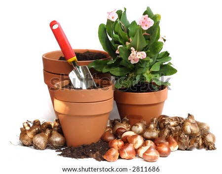 spring bulbs - stock photo
