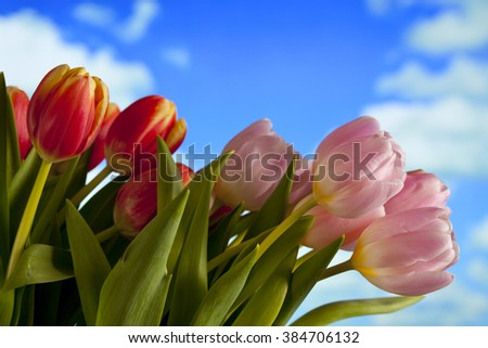Spring bunch of tulips on blue sky background - stock photo