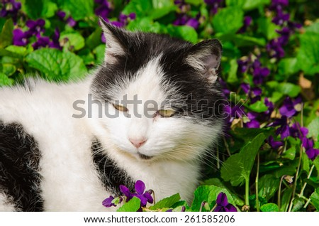 Spring cat on the violet flowers - stock photo