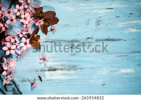 Spring cherry blossom on blue rustic wooden backkground - stock photo