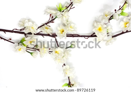 Spring cherry blossom on the white background