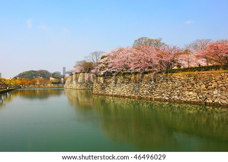 spring cherry blossoms on the moat of Himeji Castle, Japan - stock photo