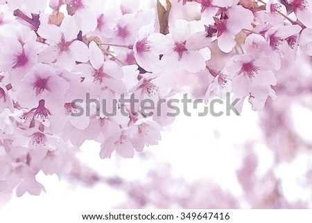 Spring Cherry blossoms, pink flowers - natural background  - trend color rose quartz - pastel tone - stock photo