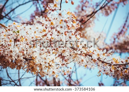 Spring Cherry blossoms, pink flowers, vintage color style