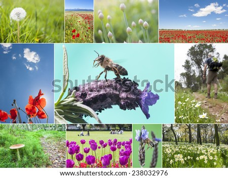 Spring collage with different flower and typical springtime pictures - stock photo