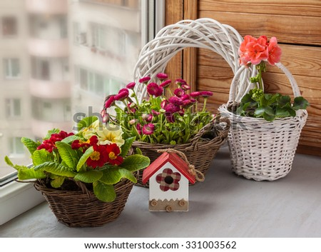 Spring composition of daisies and primroses and pelargonium  in baskets on window - stock photo