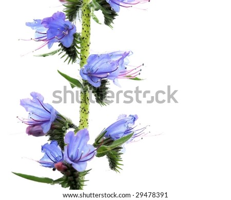 spring concept. young emerging flora against white background. - stock photo