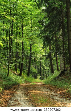 spring czech forest as very nice natural background - stock photo