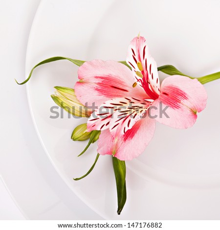 Spring decoration with pink alstromeria of a festive table - stock photo
