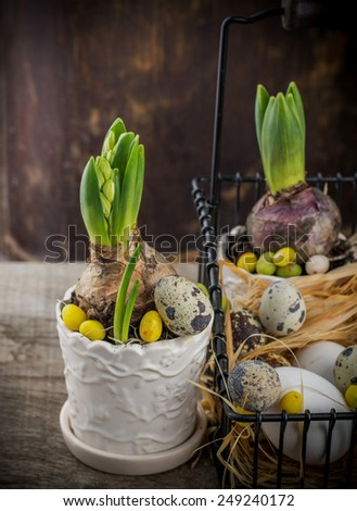 spring decoration with quail eggs and hyacinth flower. Selective focus - stock photo