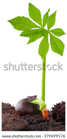 Spring, easter and chestnut,    - stock photo