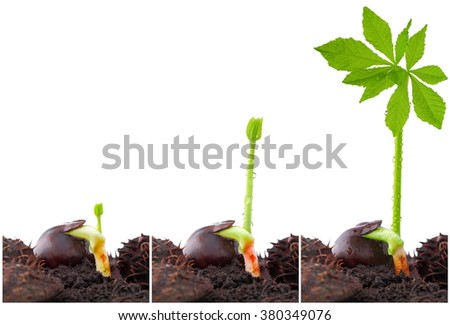 Spring, easter and chestnut - stock photo