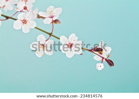 Spring Easter greeting card. Branch of blossom cherry tree over blue sky.  - stock photo