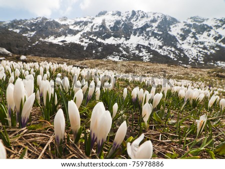 Spring exploded in Alps