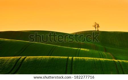 Spring farm - stock photo