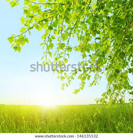 Spring field, green leaves and sunlight. - stock photo