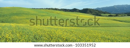 Spring Field, Mustard Seed, near Lake Casitas, California - stock photo