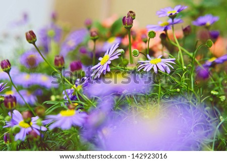 Spring field of white fresh daisies, natural landscape - stock photo