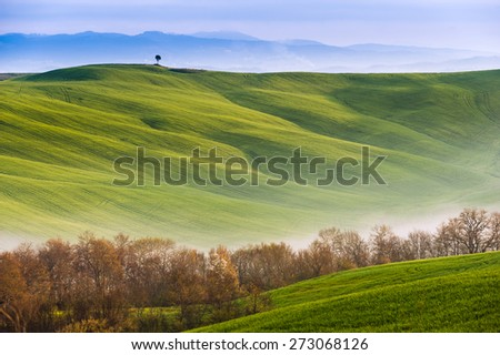 Spring field with billowing mists