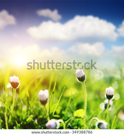 Spring field with daisy on bright sunny day with cloudy sky - stock photo
