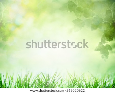 Spring field with growing grass and tree branches - stock photo