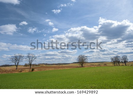 Spring field with trees - stock photo